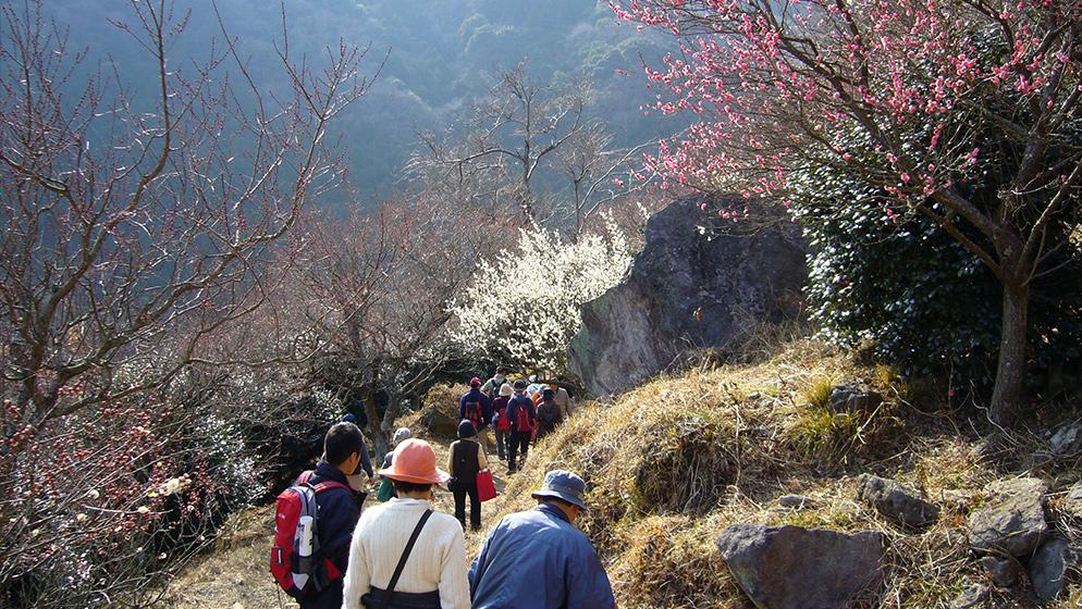 幕山ハイキング