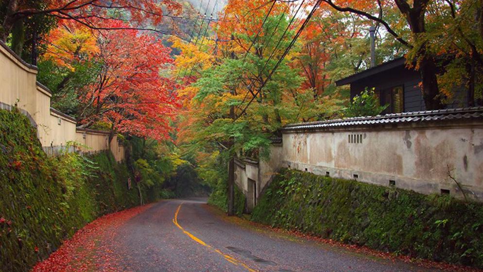 Momiji no Sato (Maple Country) and Tea House